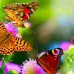 Райский уголок «живых цветов» в Краснодаре