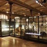 Современные музейные витрины — удобно, стильно, надежно