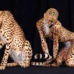 Боди-арт как новый взгляд на красоту человеческого тела