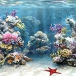 Чистая вода — залог роста ваших рыб