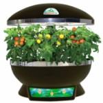 Зима — не помеха для свежих овощей, если есть домашний сад