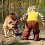 Не разрешайте детям подходить к странно ведущей себя собаке